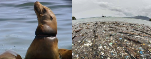 lixos-plasticos-nos-oceanos_afetam-fauna-e-flora